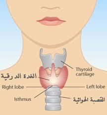 علاج الغدة الدرقية بالاعشاب للدكتور عبد الباسط , الاعشاب وفائدتها فى العلاج