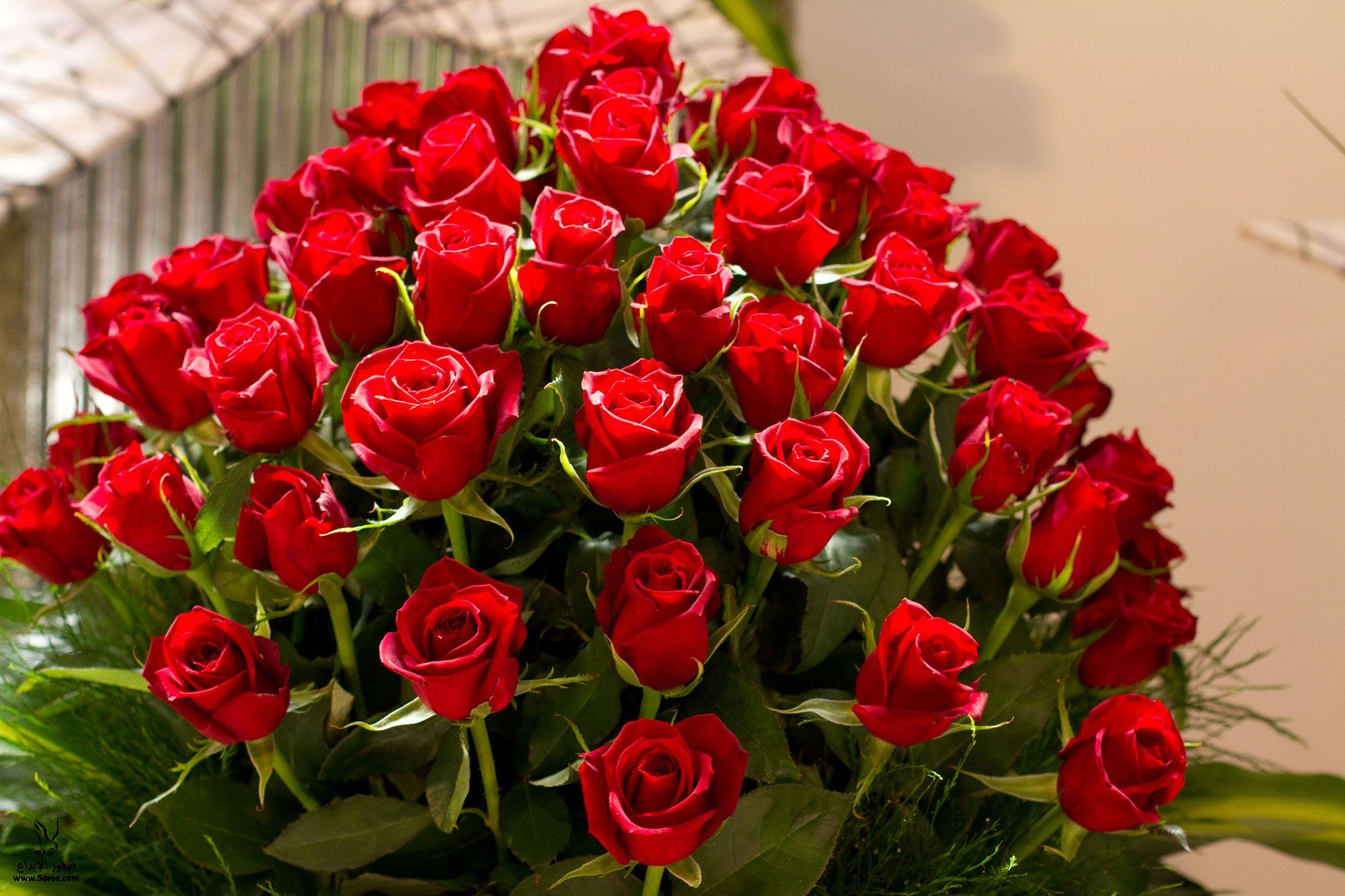 بالصور اجمل الورود والازهار 10858 2