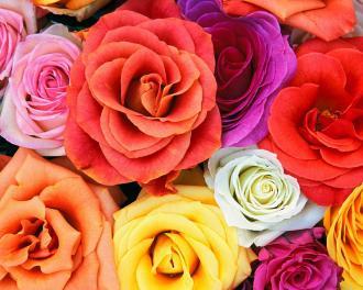 بالصور اجمل الورود والازهار 10858 3
