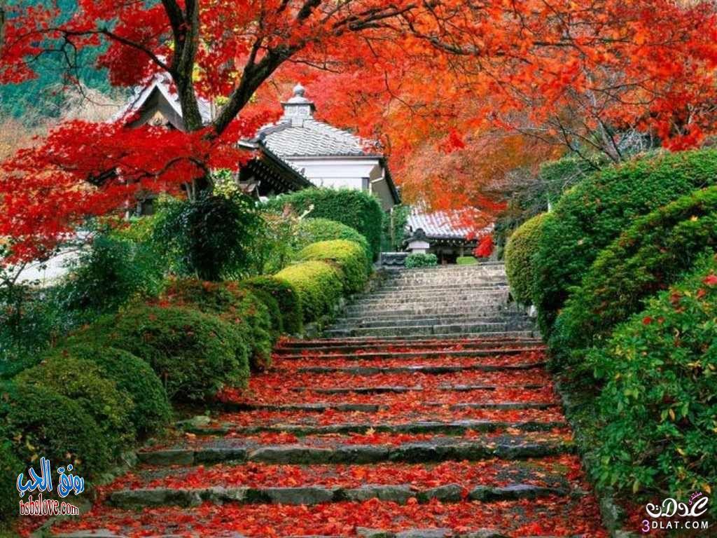 صورة صور طبيعة جميلة
