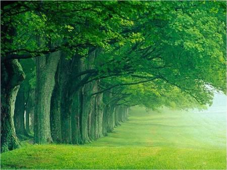صور تفسير الاحلام الخضرة