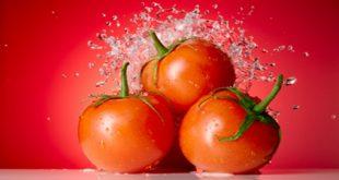 الطماطم في المنام