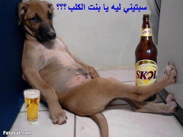 صوره اجمل صور مضحكة تم عرضها على فيس بوك