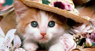 اجمل الصور للحيوانات