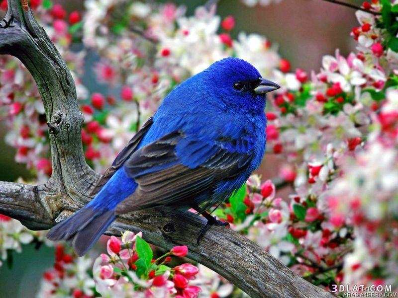 بالصور صور طيور جميله 1533 2
