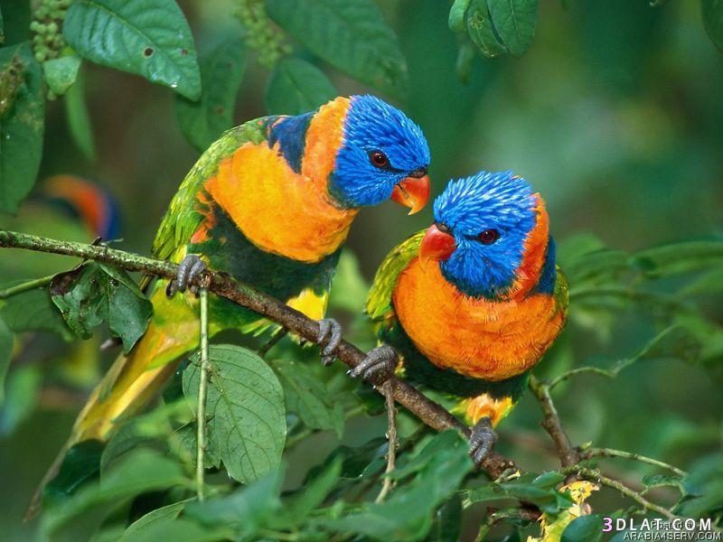 بالصور صور طيور جميله 1533 3