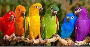 صور طيور جميله
