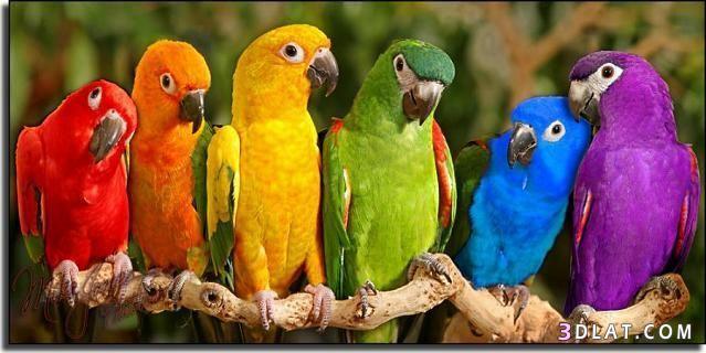 صوره صور طيور جميله