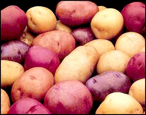 صورة البطاطس يكبر المؤخره , طريق سهله لتكبير المؤخره
