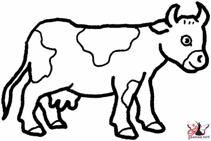 بالصور رسومات للحيوانات 19041
