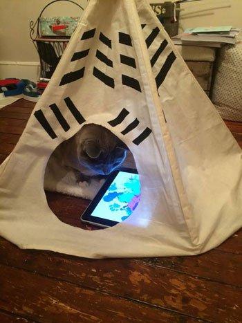 صور القطط الكثيرة في المنام