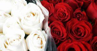 اجمل صور الورد , صور من اروع الورد الاحمر