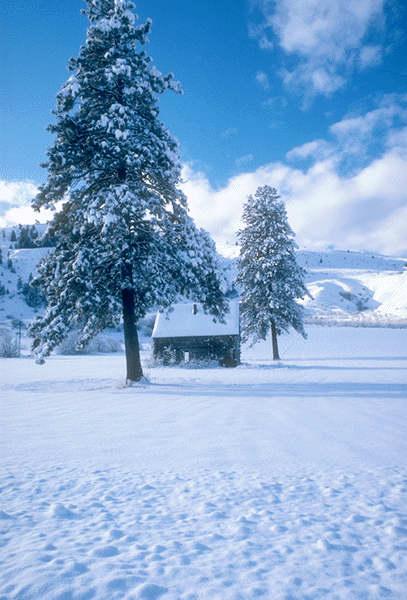 صور صور الثلج