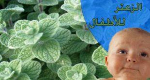 فوائد الزعتر للاطفال الرضع , الزعتر وفائدته العظيمه