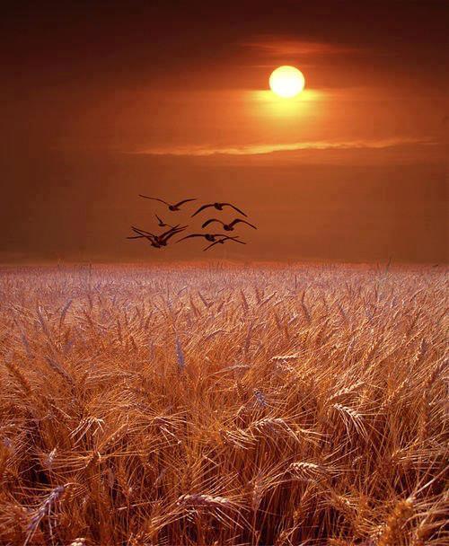 بالصور صور شروق الشمس 3214