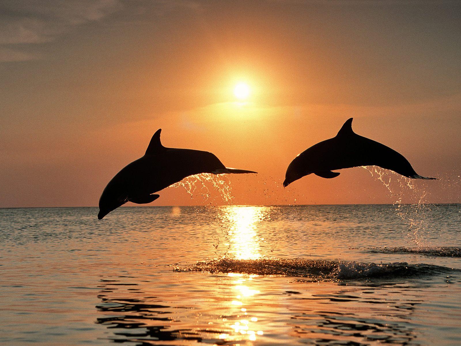 صوره صورة جميلة , اجمل الصور من العالم