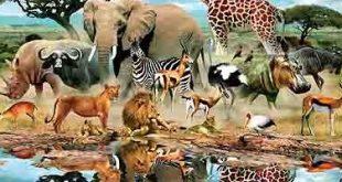 رؤية الحيوانات في المنام , رؤيه الحيوان فى الحلم