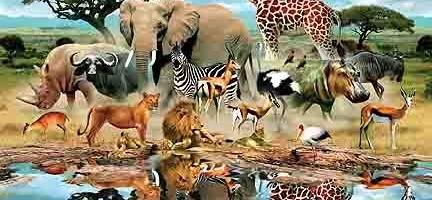 صورة رؤية الحيوانات في المنام , رؤيه الحيوان فى الحلم 3725