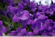 بالصور اللون البنفسجي في المنام 3867 1 110x75
