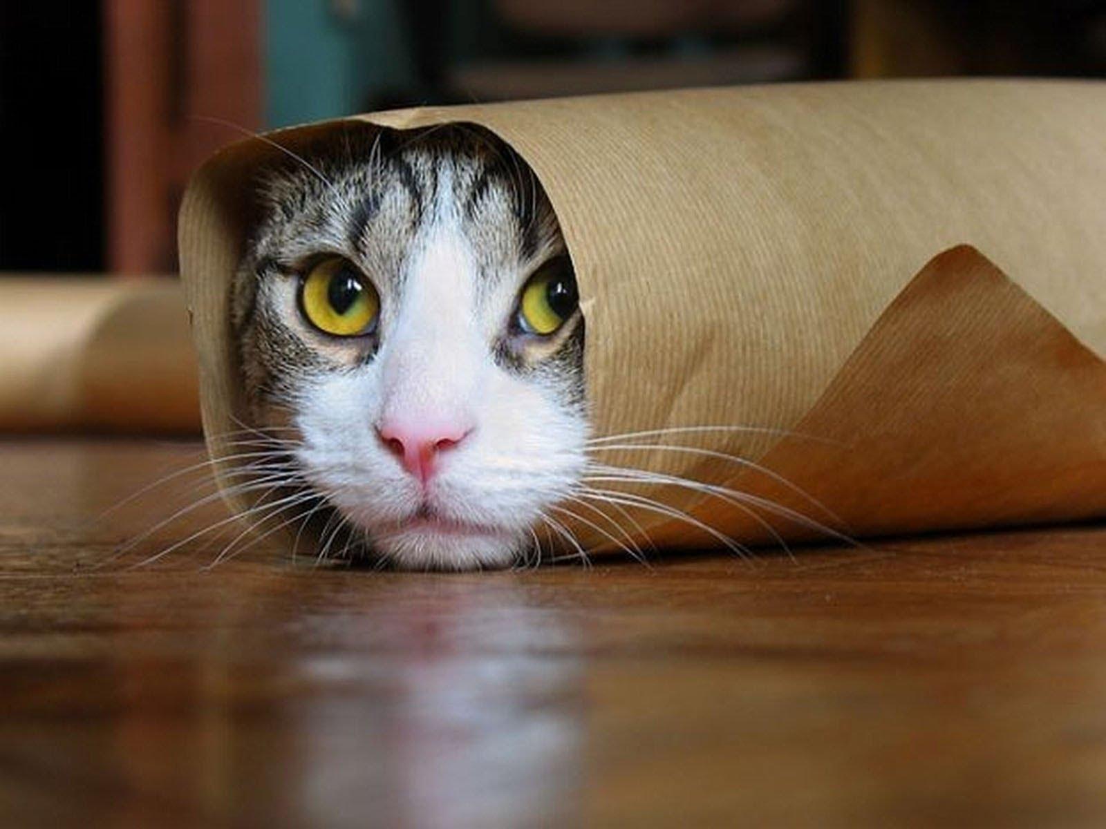 صورة ولادة القطط في المنام ، حلمت اني الهره في بيتي تلد 55591