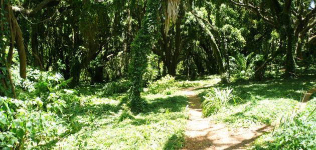 صورة وصف الغابة الخضراء , بحث عن الغابه
