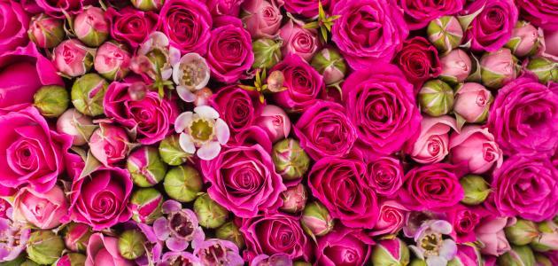 صوره تفسير حلم هدية الورد , رؤيه عطيه الورد