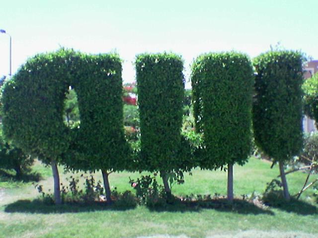صور اشجار مكتوب عليها اسم الله