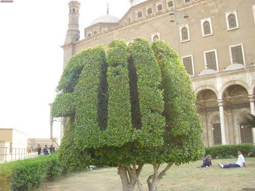 بالصور اشجار مكتوب عليها اسم الله 7907 2