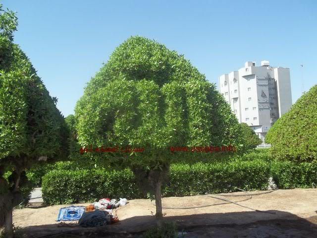 بالصور اشجار مكتوب عليها اسم الله 7907 3
