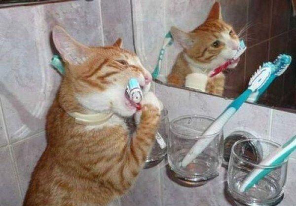 صوره صور قطط مضحكة
