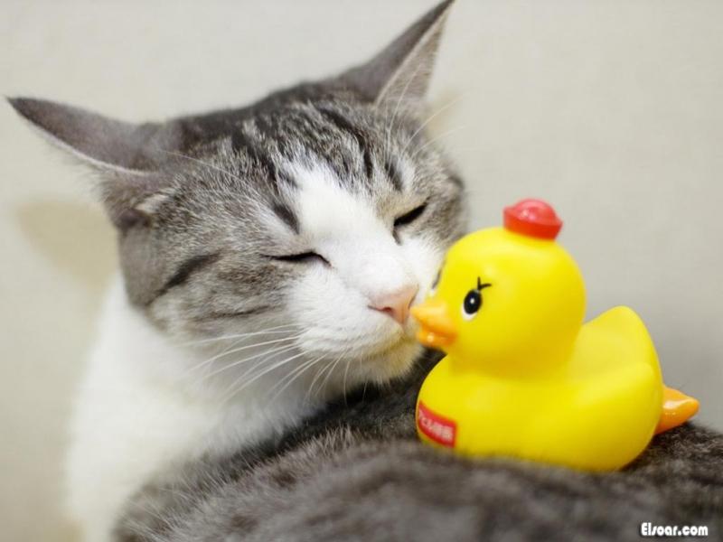 بالصور صور قطط مضحكة 862 2
