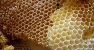 فوائد شمع العسل للمعدة