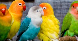 صوره اغاني الطيور mp3