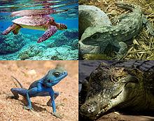 بحث عن الزواحف مع الصور