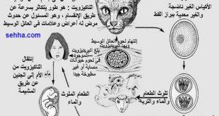 علاج داء القطط اثناء الحمل