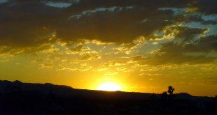 صوره منافع الشمس ودورها في الحياة