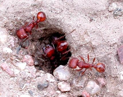 موضوع تعبير عن النمل - افضل كيف