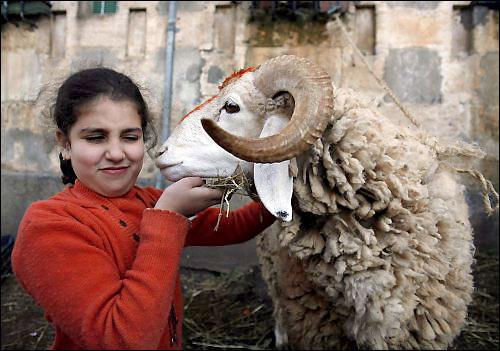 صور بحث عن عيد الاضحى المبارك