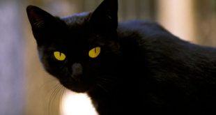القطط المخيفة