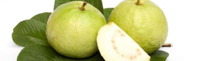 بالصور فوائد الجوافة للحامل 89