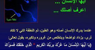 معلومات عن خلق الانسان