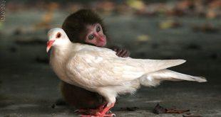 رحمة الحيوانات