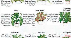 صوره كيفية الاعتناء بالنباتات المنزلية