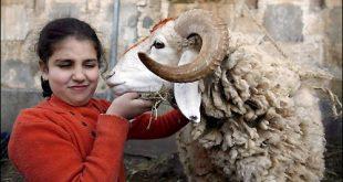 صوره بحث عن عيد الاضحى المبارك