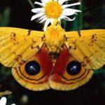 اجمل الفراشات في الكون