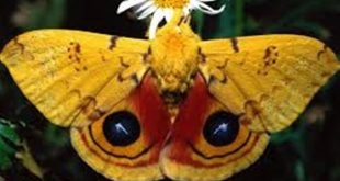 صور اجمل الفراشات في الكون