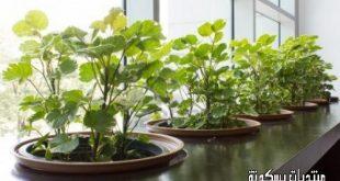 صور نباتات الزينة الداخلية