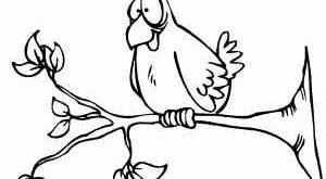 صوره رسومات عصافير