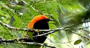 بالصور صور اجمل انواع الطيور 0b15962e31e6de89b9151c878ea23b34 310x165