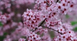 صورة اريد تعبير عن فصل الربيع